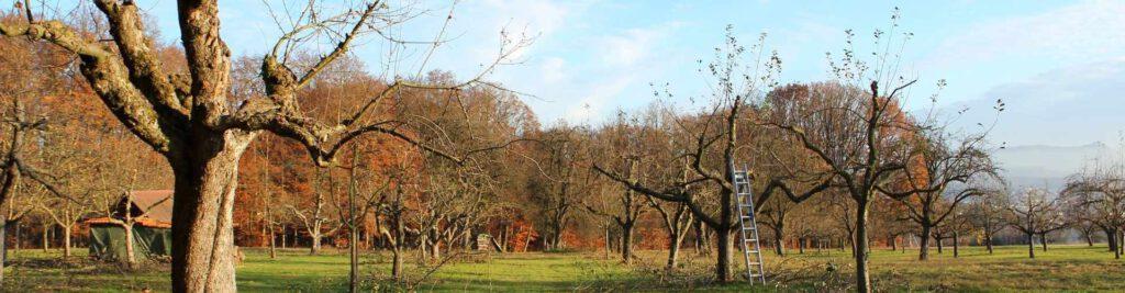 Local Rochester Tree Service