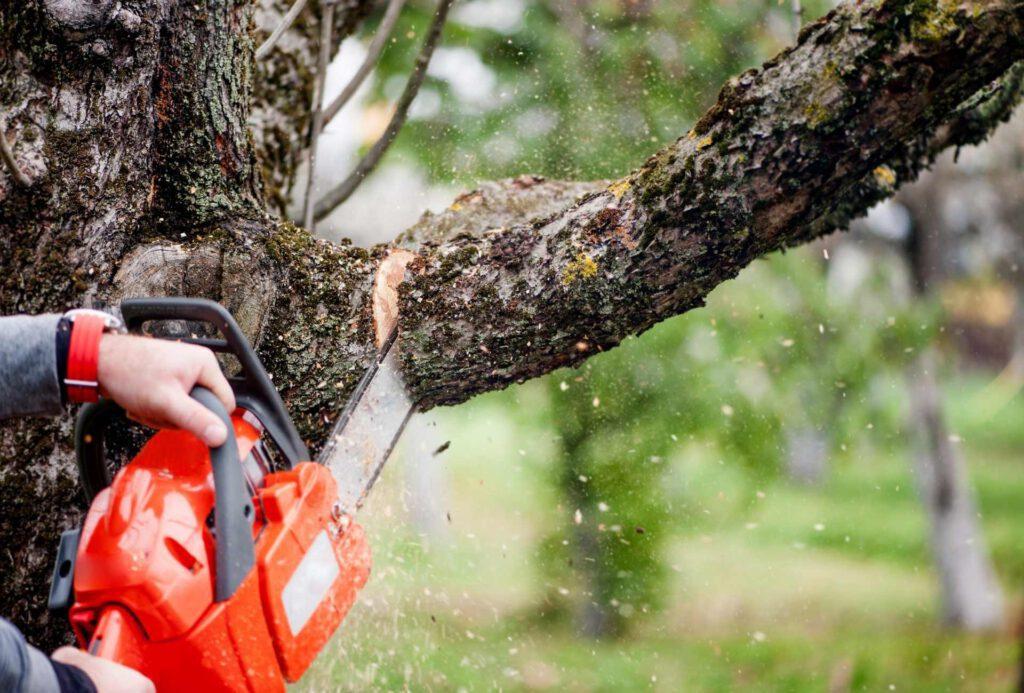Tree cutting service near me