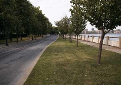 Rochester NY Tree Service