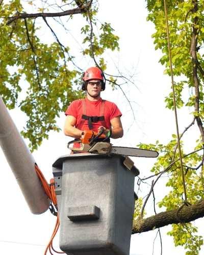 Victor Tree Service