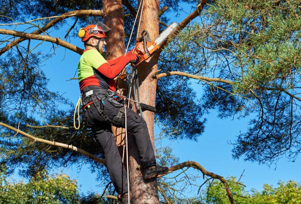 Rochester Tree Service