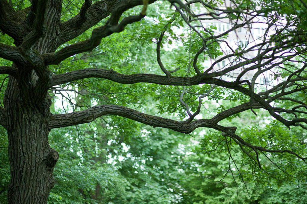 North Gates Tree Service